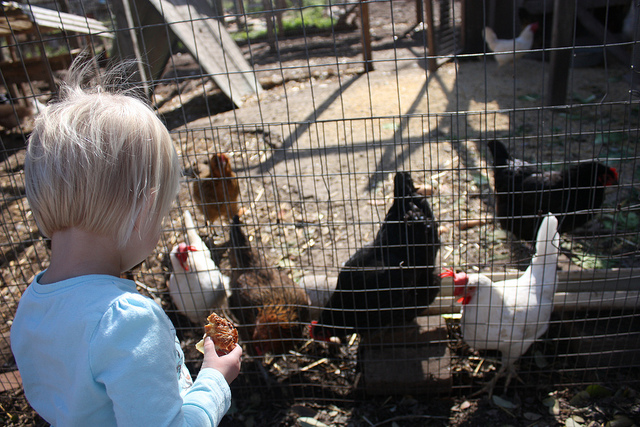 Chicken coop at Boggy Creek Farm