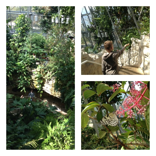 HMNS Butterfly Center outside