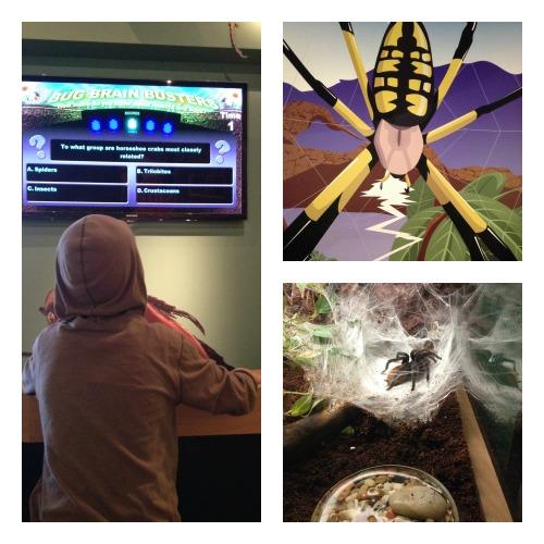 HMNS Butterfly Center