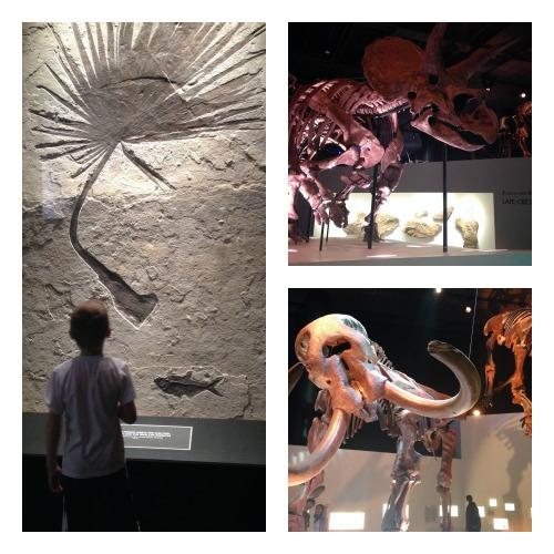 HNMS Paleontology
