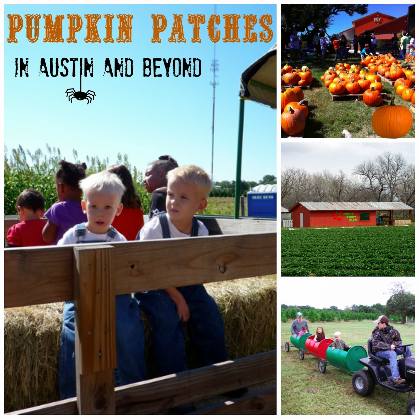 Pumpkin Patches in Austin