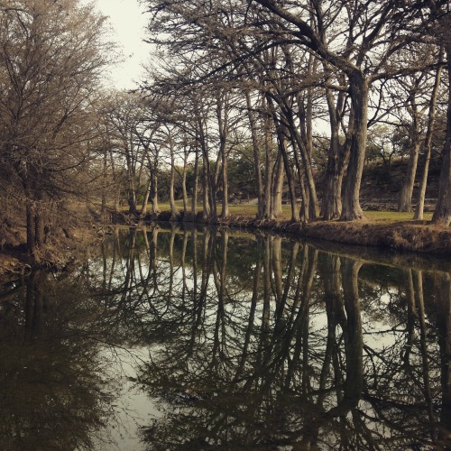 I walked down to the Medina River after breakfast. Nature therapy at its best.
