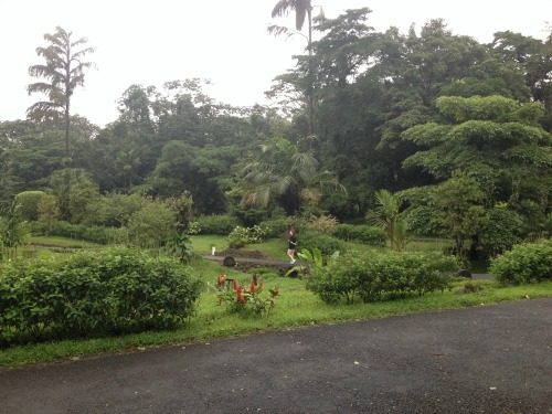 The view out of our room at the Arenal Observatory Lodge. Countless birds, hummingbirds and coatis.