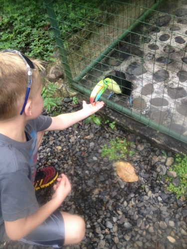 NBD. Just feeding a toucan in Costa Rica.