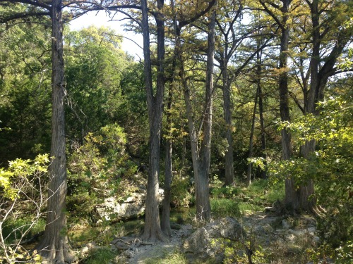 Hamilton pool cypress trees