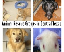 Want to Adopt or Foster An Animal? Rescue Groups in Central Texas