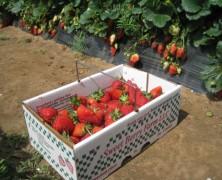 Savor Springtime at Sweet Berry Farm