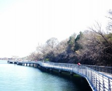 A Walk On The Boardwalk: Austin Bucket List for 2015