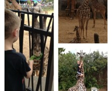 Road Trip: Houston Zoo