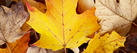 Top 10 Fall Events in Austin