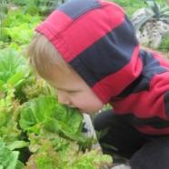 Gardening with Kids 101
